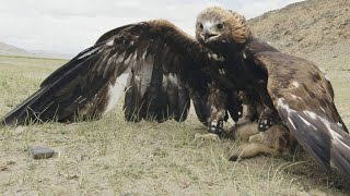 Meet the Nomad Girl Who Hunts With a Golden Eagle