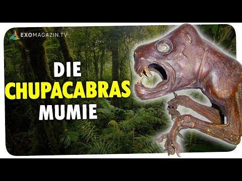 Unheimlicher Fund: Die Chupacabras Mumie | ExoMagazin