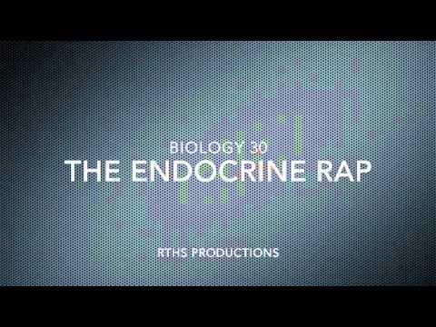 endocrine-system-rap