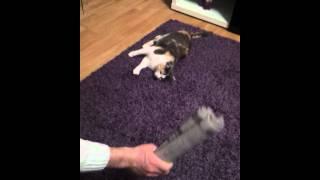 Люся, Кот которому нравится когда его бьют. Прикол.