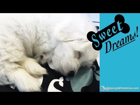 Dog Barking? Soothe Your Pet Now with Calming White Noise   Dog Sleep Sounds 10 Hours