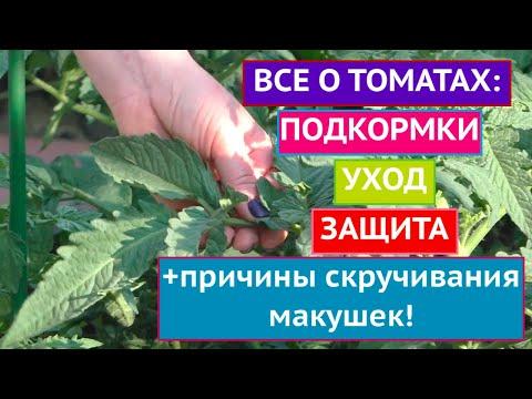 Вопрос: Какие помидоры сажать, если опоздал и уже началось лето?