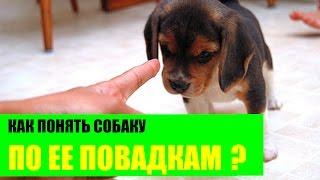 Как понять собаку по ее повадкам?