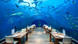 Top 10 Restaurants - World's Top 10 EXOTIC Restaurants | 2014 HD