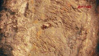 Горная охота Эдуарда Бендерского. Таджикистан. Бухарский мархур. 2017.