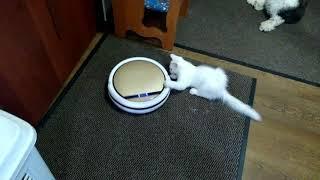 Кот и робот-пылесос