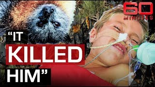 Deadly threat of Bat Lyssavirus | 60 Minutes Australia