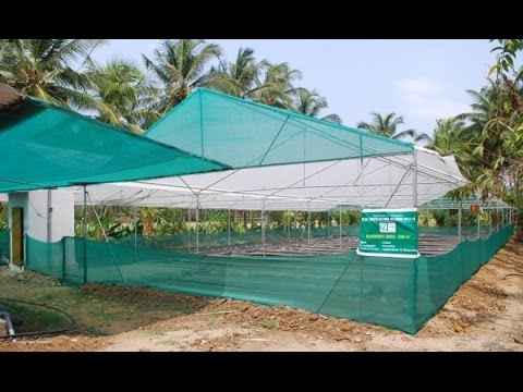 Nanniode Aquaponics: India's Largest Commercial Aquaponics