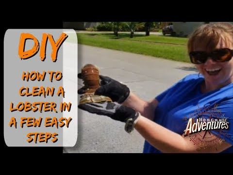Clean Spiny Florida Lobster in a Few Steps: Homemade Adventures