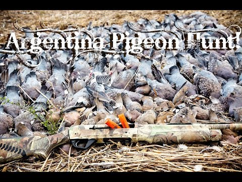 Great Pigeon Hunt In Argentina With The ShotKam!