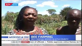 Bee farming booms in Kitui County, known for quality honey production