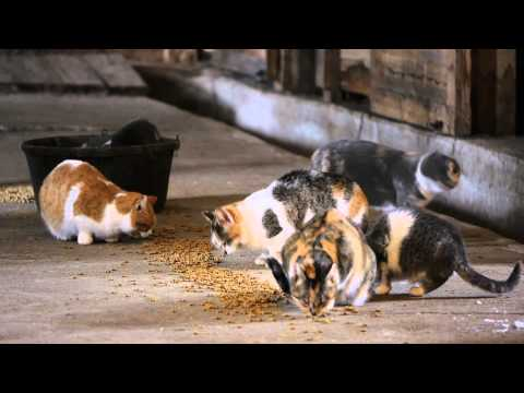 Feral Cat Colony - Aitkin, MN - FHART Project
