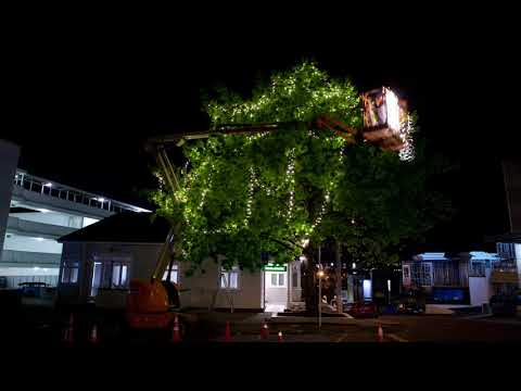 Installing commercial fairy lights on a tree decorative lighting installing commercial fairy lights on a tree decorative lighting company aloadofball Choice Image