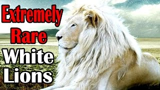National Geographic Documentary - Endangered African White Lions