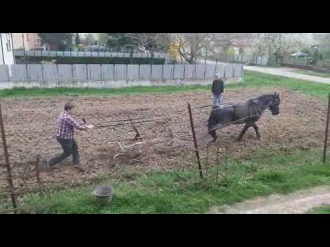 ecological agriculture, working with horse, cultivator
