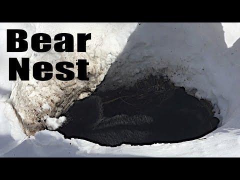 Where Do Black Bears Sleep in the Winter