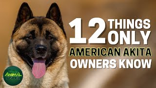 12 Things Only American Akita Dog Owners Understand