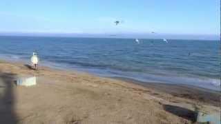 Феодосия. Песчаный пляж, р-н