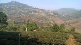 Mae Salong -Trail running