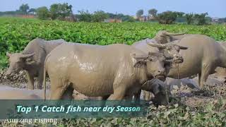 Top 12 Amazing Fishing Catch Many Fish Near Dry Season