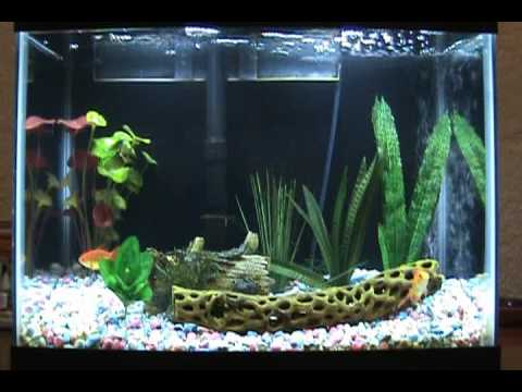 how to set up a goldfish tank without a filter