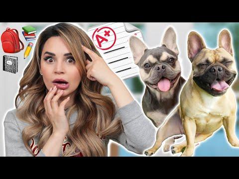 I Tested My Dogs Intelligence!