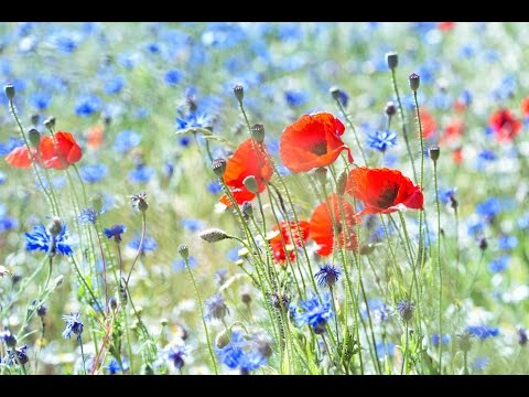 "Peaceful Music, Relaxing Music, Instrumental Music ""Hillside Meadow"" by Tim Janis"