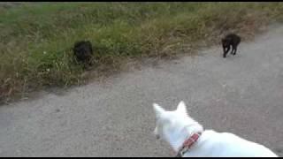 散歩中にいた黒猫の子猫。野良猫だ。近づいていくとじっとしていて動か...