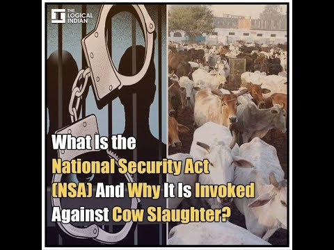 What Is the National Security Act(NSA) And Why It Is Invoked Against Cow Slaughter?