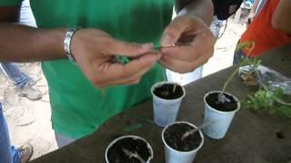 enxertia (agronomia ufac) prof. dr.regina