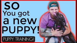 Training a puppy tips and advice - Things you must know about puppy training!