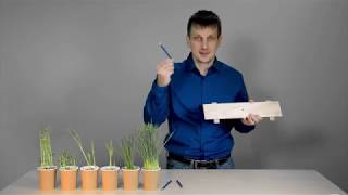 АГРОСЕКРЕТЫ: Регуляторы роста против полегания