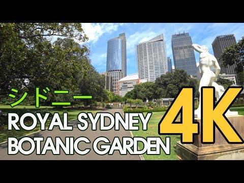 【4K SYDNEY シドニー  AUSTRALIA】 Walking Trail The Royal Sydney Botanic Garden