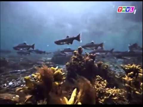 Thế giới động vật- Cá mập sát thủ P1