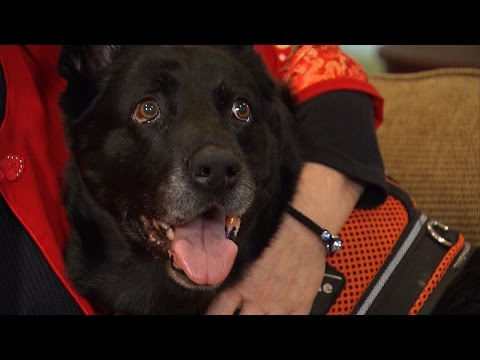 Dog Dies of Cancer After Sniffing Out Her Owner's Lung Cancer
