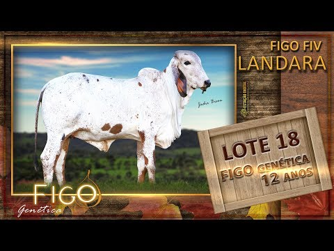 LOTE 18 - FIGO FIV LANDARA - HCFG 1490