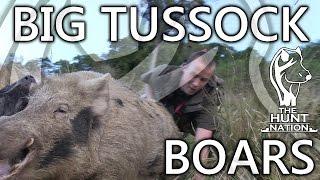 Big Tussock Boars Full Film HD