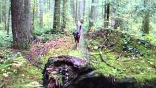 Forest Agility With Dogs In The Pacific Northwest