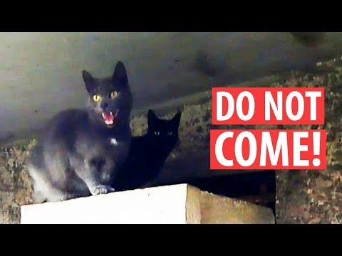 Stray Mom Cat Hisses Protecting Her Kittens