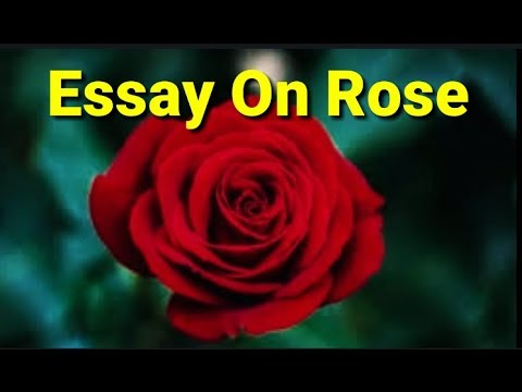 Rose Essay In English Essay On Rose 10 Lines Rabout Rose Rose Flower Essay Youtube