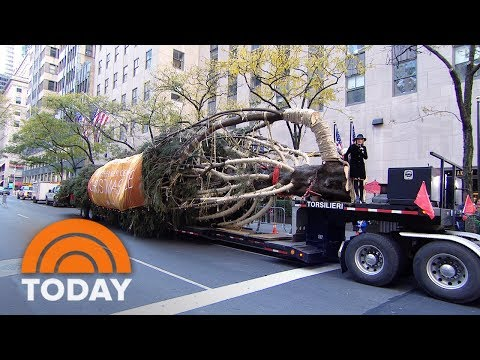 Rockefeller Center Christmas Tree Arrives To The Plaza Live On TODAY | TODAY