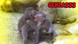 Angry baby monkey