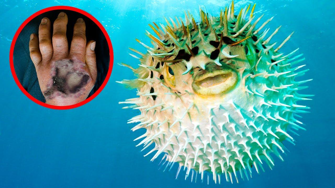Download 12 Most VENOMOUS Sea Creatures In The World!