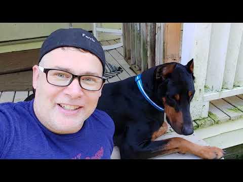 Doberman Vlog - LED Light Up Safety Collar by Blazin Bison