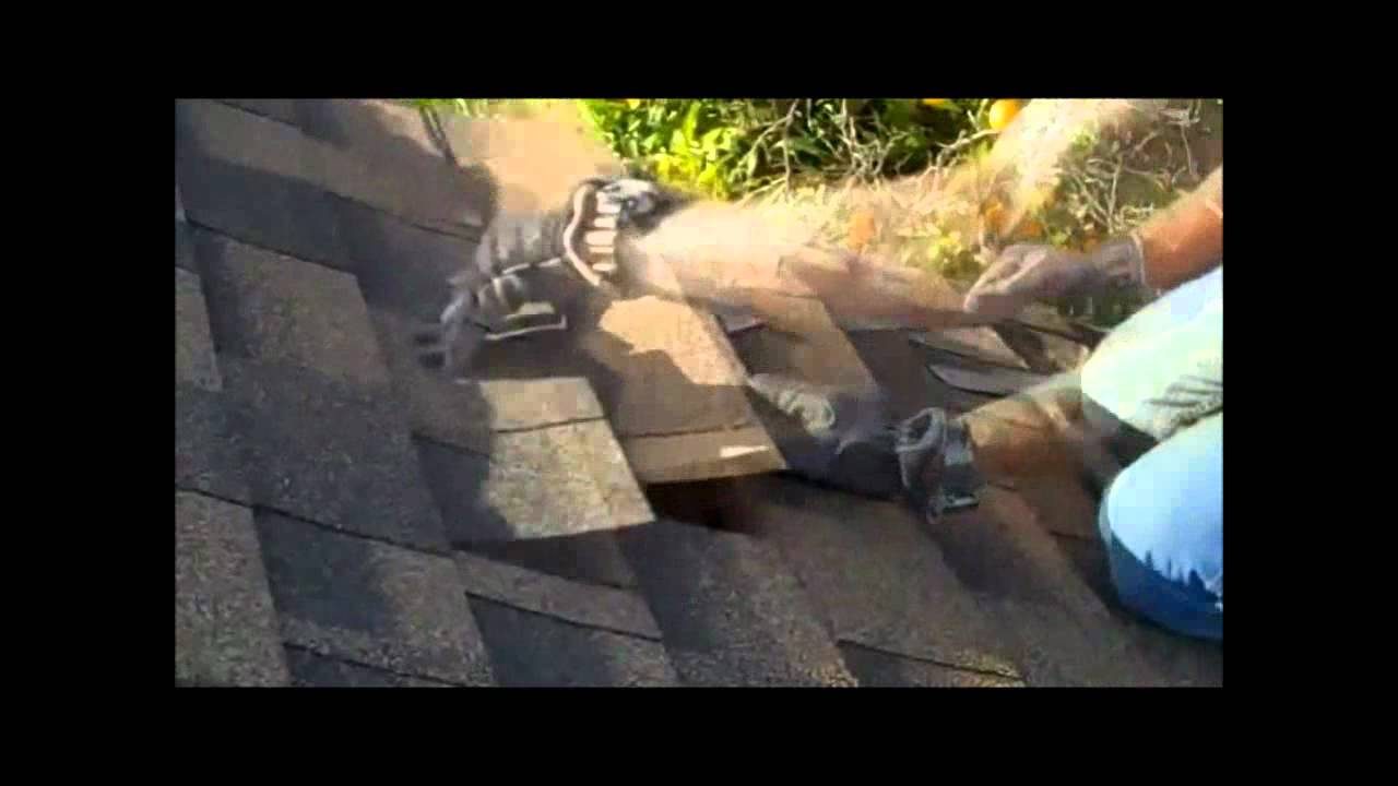 Roof Repair How To Replace Roofing Shingles Youtube