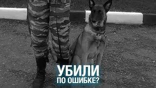 В ПОДМОСКОВЬЕ убили полицейскую собаку на глазах у кинолога