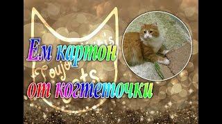 Кот жует картон от когтеточки. А что ест ваша кошка??? ))))