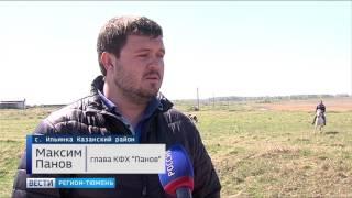 Экс-программист добился успеха в разведении коров в Тюменской области