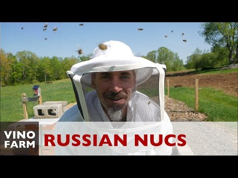 Attacked By Russians - Beekeeping Nuc Installation
