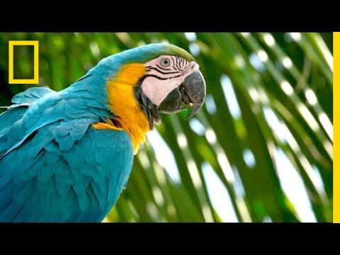 hqdefault - Parrot Endangered